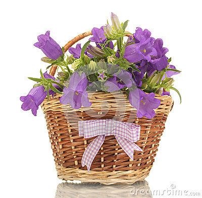Free Blue Bell Flowers In Basket Royalty Free Stock Image - 25830536