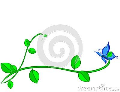 Blue Buttarfly on plant