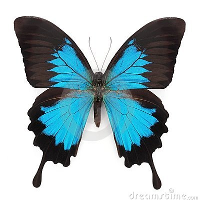 Free Blue Butterfly Royalty Free Stock Image - 14832446