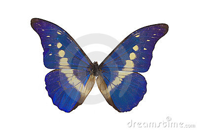 The Blue Butterfly 3