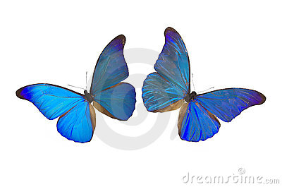 The Blue Butterfly 8