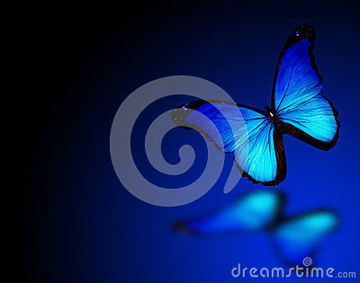 Blue butterfly on background