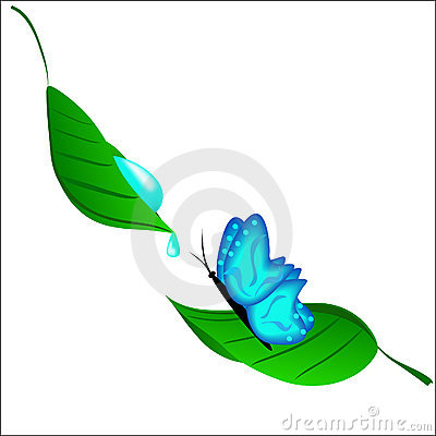 The blue butterfly drinking dew