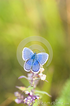 Free Blue Butterfly On A Stem Stock Image - 92960771