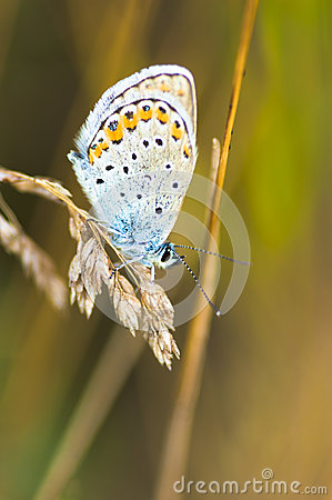 Free Blue Butterfly On A Stem Stock Images - 92964754