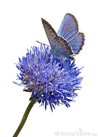 Free Blue Butterfly On Flower Cutout Stock Images - 8225274