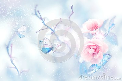 Blue butterfly in the snow on pink roses in a fairy garden. Artistic Christmas image. Stock Photo