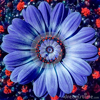 Free Blue Camomile Daisy Flower Spiral Abstract Fractal Effect Pattern Background. Blue Violet Navy Flower Spiral Abstract Pattern Royalty Free Stock Photos - 105117238