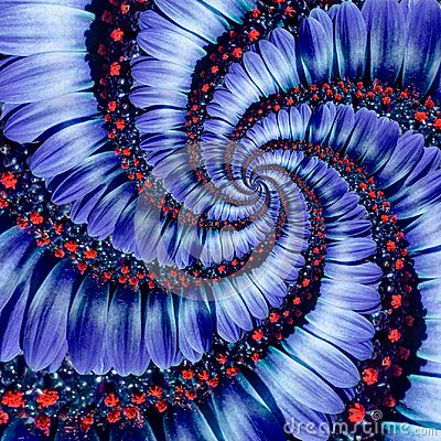 Free Blue Camomile Daisy Flower Spiral Abstract Fractal Effect Pattern Background. Blue Violet Navy Flower Spiral Abstract Pattern Stock Photography - 105117332