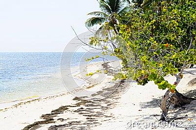 Blue Caribbean Coast Line