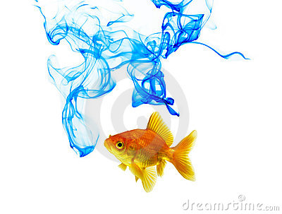 Blue Color Ink And Goldfish