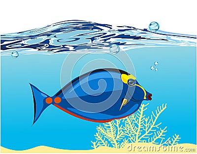 Blue coral fish