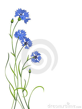 Free Blue Cornflower Bouquet Pattern Isolated Stock Photography - 23568492