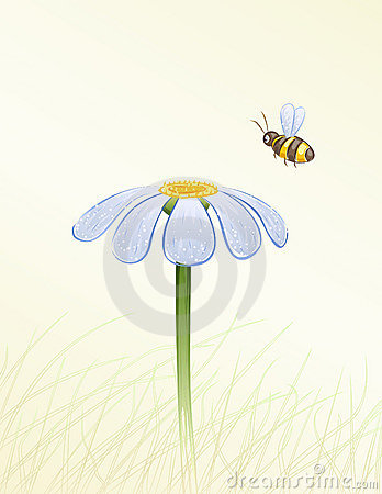 Free Blue Daisy And A Bee Stock Photo - 10103480