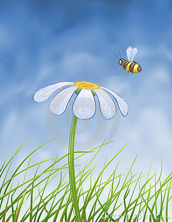 Blue daisy and a bee