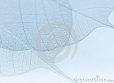 Blue decorative leaves