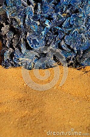 Blue desert rose 2
