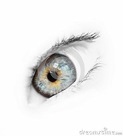 Free Blue Eye Stock Photo - 565590