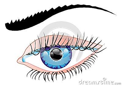 Blue eye of a woman