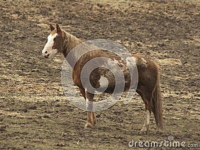 Blue-eyed horse