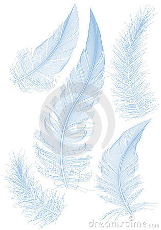 Free Blue Feather Royalty Free Stock Photos - 19881578