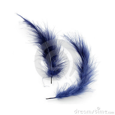 Free Blue Feathers Royalty Free Stock Images - 548619