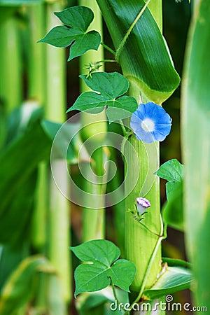 Free Blue Flower Stock Image - 25840761
