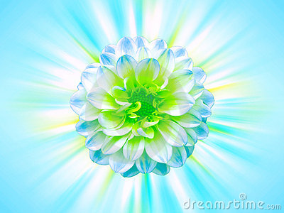 Blue flower with rays