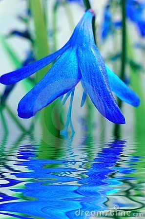 Blue flower reflection in water