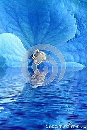 Blue flower in water