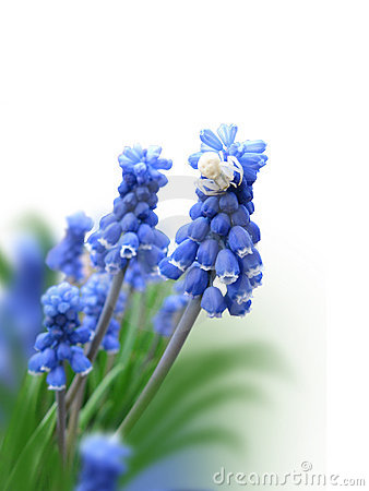Free Blue Flower With A Spider Stock Image - 13802911
