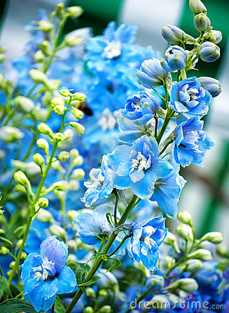 Free Blue Flowers Royalty Free Stock Photos - 14950368