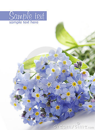 Free Blue Flowers Royalty Free Stock Photos - 6655558