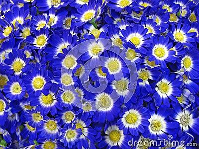 Blue flowers, petals concept, nature