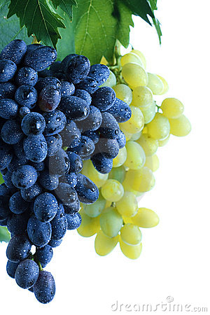 Blue and green grape cluster with leaves on vine