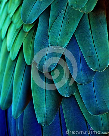 Free Blue/Green Macaw Feathers Royalty Free Stock Photo - 38866105
