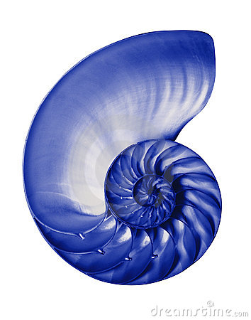 Blue half nautilis,isolated