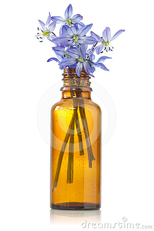 Blue hepatica flowers in a bottle