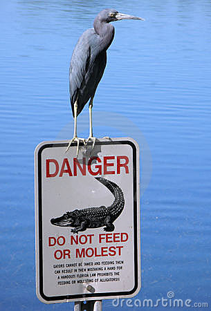 Free Blue Heron On Florida Sign Royalty Free Stock Image - 3887626