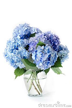 Free Blue Hydrangeas Stock Image - 9796661