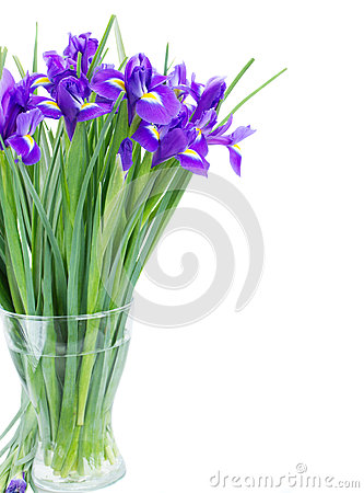 Blue irise flowers posy in vase