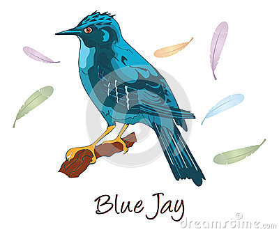 Blue Jay, Color Illustration