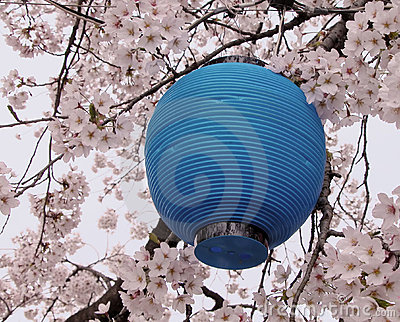 Blue lantern and flowers