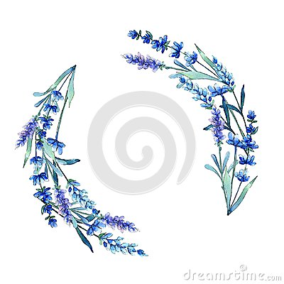 Free Blue Lavender. Floral Botanical Flower. Wild Spring Leaf Wildflower Frame In A Watercolor Style. Royalty Free Stock Photo - 116605835
