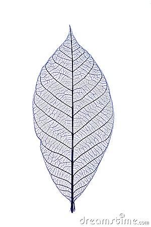 Free Blue Leaf Royalty Free Stock Image - 1863856