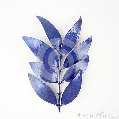 Free Blue Leaf Design Elements. Decoration Elements For Invitation, Wedding Cards, Valentines Day, Greeting Cards. Isolated On White Ba Stock Photography - 103007582