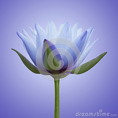 Free Blue Lotus Stock Photography - 38757332