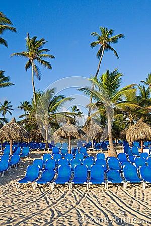 Blue lounges on sand beach under palms