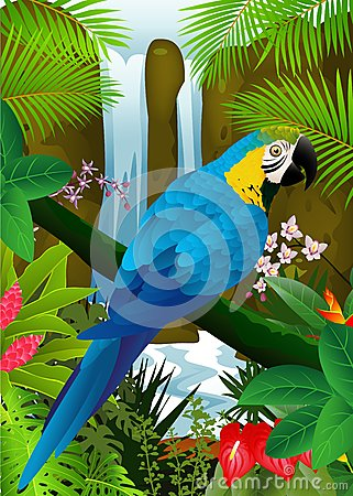 Blue macaw in the tropical forest