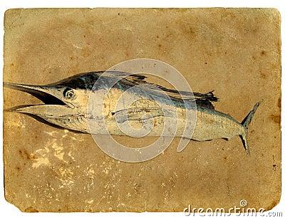 Blue marlin fish (sword fish) on the sand.